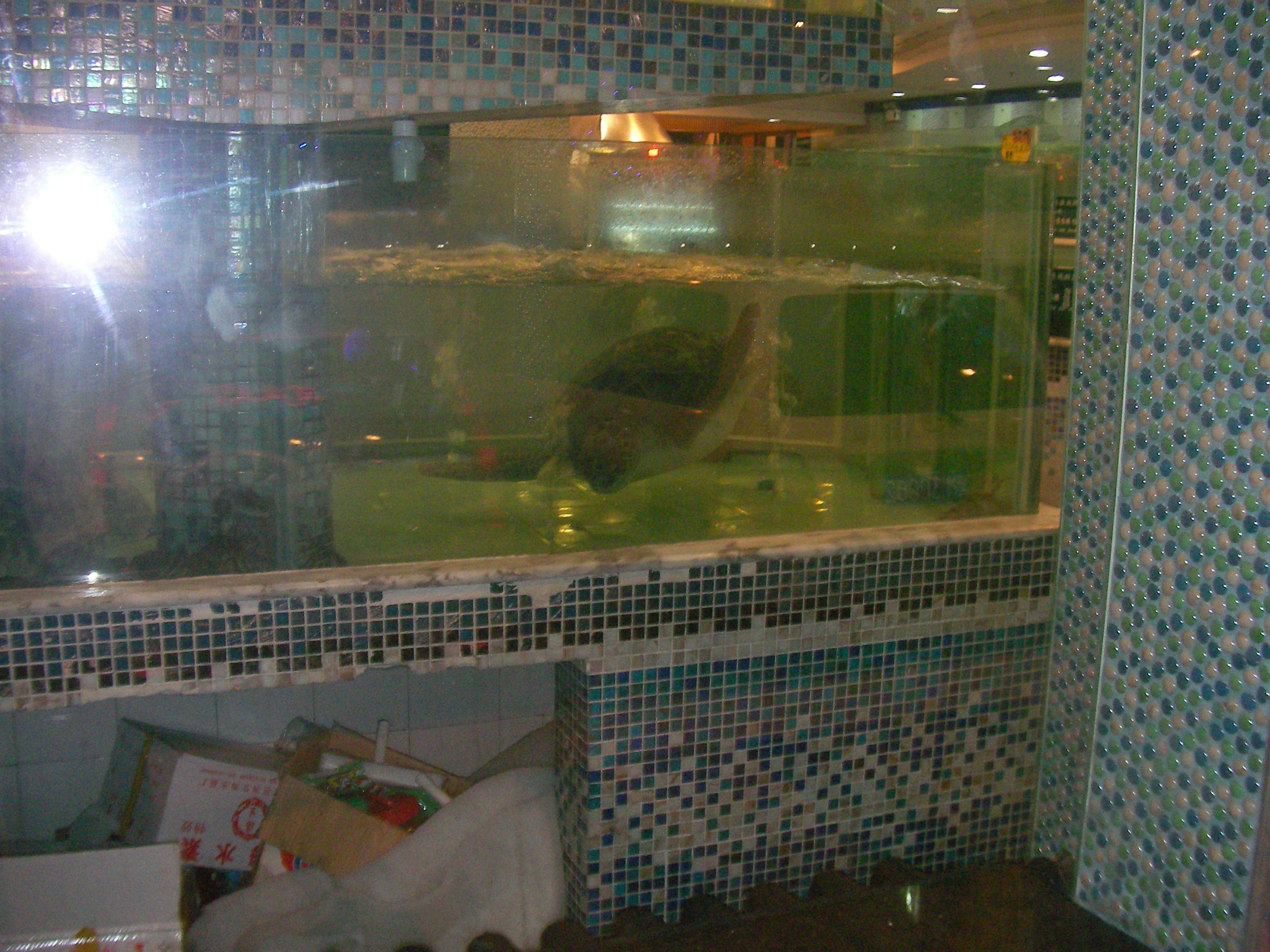 Destination empire du milieu page 5 for Aquarium tortue aquatique